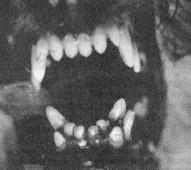 Схема зубов той пуделя